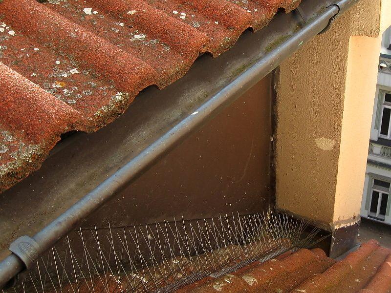 Holubi rádi sedají na závětrná zákoutí střechy